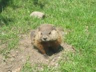 Juan the groundhog
