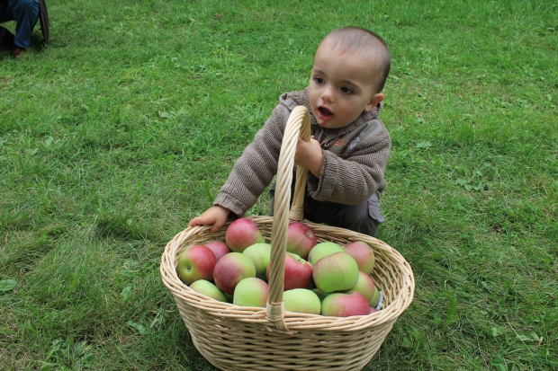 This baby is trying to steal my apples!