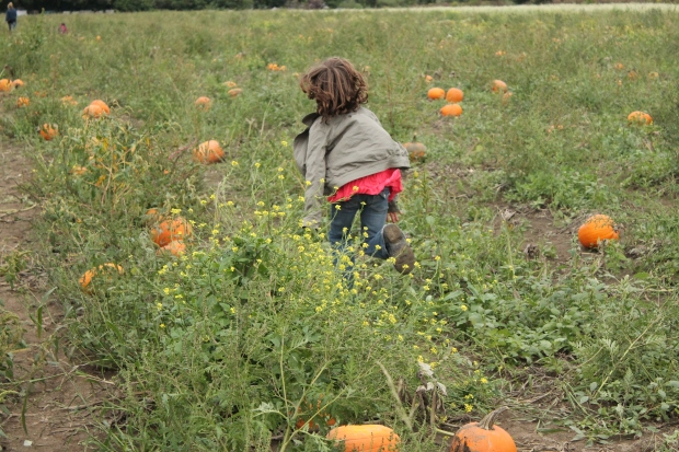 Running off to find the perfect pumpkin!